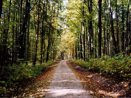 Ein schöner Waldspaziergang